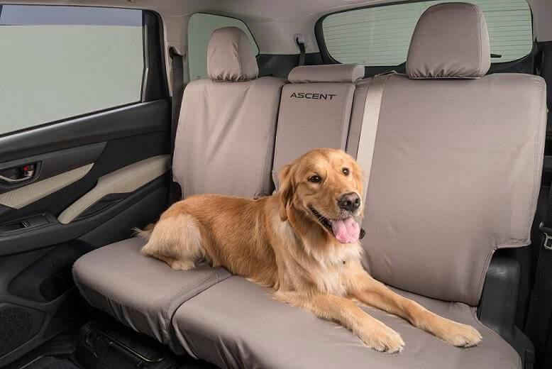 Dog-Friendly Subaru Ascent